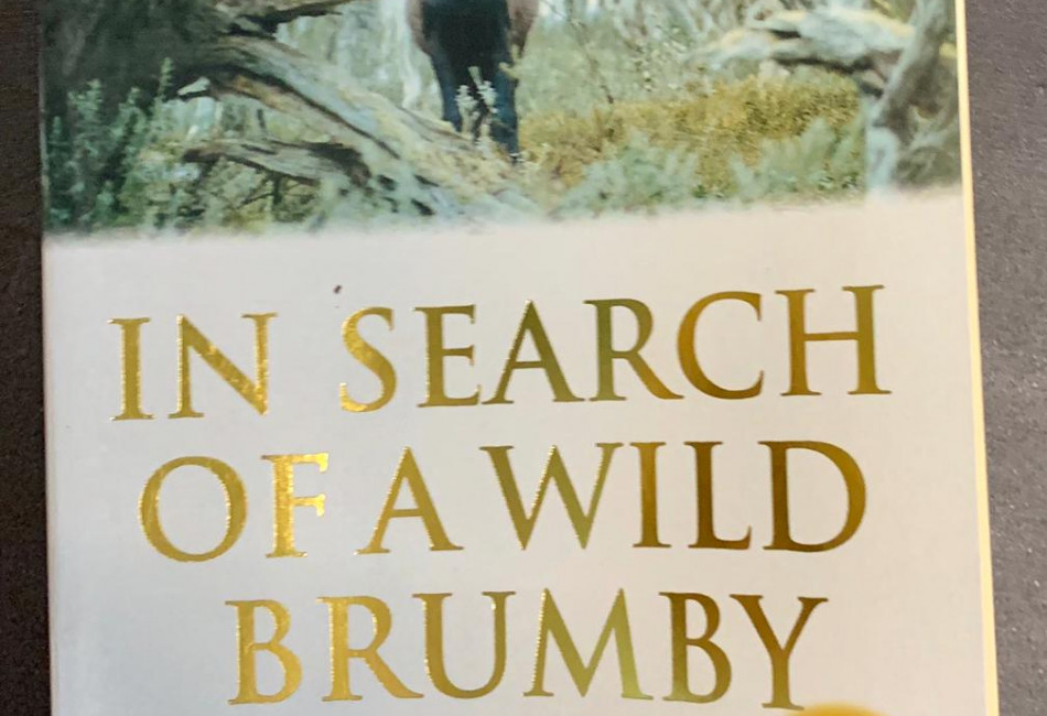 In Search of a Wild Brumby by Mike Keenan